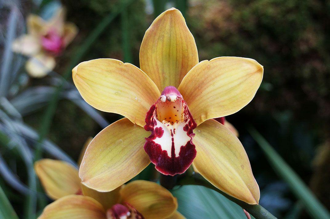 Tính chất đối xứng của hoa lan
