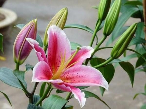 Kết quả hình ảnh cho bình hoa ly và nhiều hoa khác