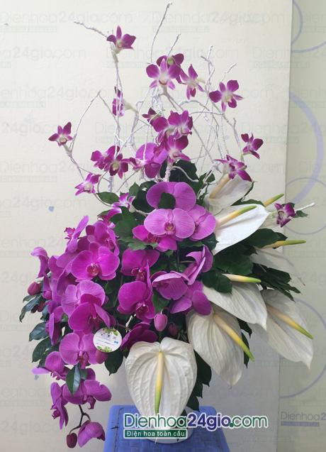Bình hoa lan hồ điệp Bi13